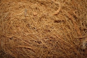 Kokos tapijt